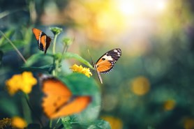 Spring 2021 UK Market Report W..